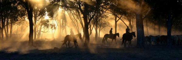 horsesinmist-blogtop
